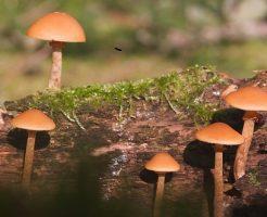 なめこ 原木 種類 栽培 菌