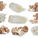 舞茸としめじの栄養価の違いは?舞茸と椎茸の違いは?