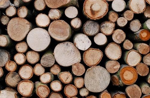 きくらげ 原木 種類