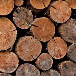 きくらげの栽培を原木で行うときの方法は?