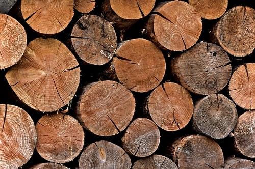 きくらげ 栽培 原木 方法